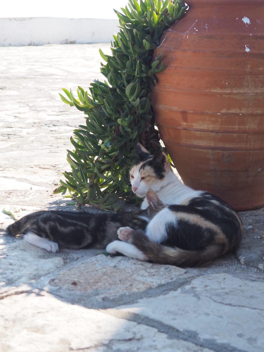 podróżowanie z kotem, kotka karmi kocię - fot. Jagna Kudła - behawiorysta, weterynarz