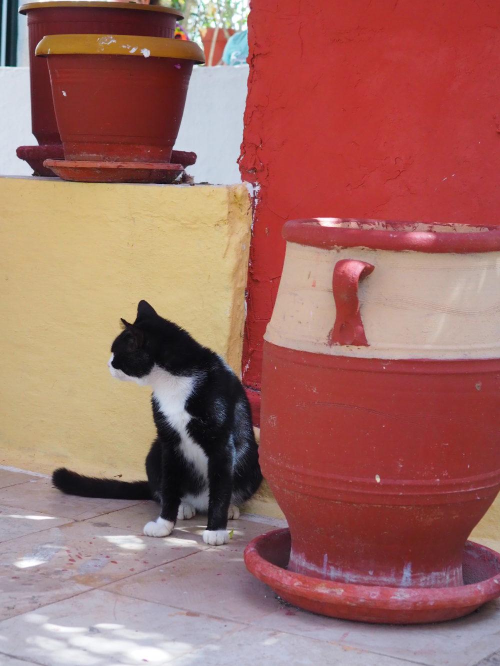 podróż z kotem, kot na wyspie - fot. Jagna Kudła - behawiorysta, weterynarz