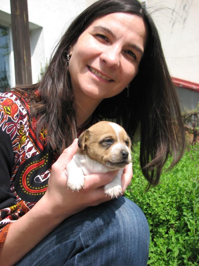 Adoptuj szczenię, które ukończyło przynajmniej 7 tygodni