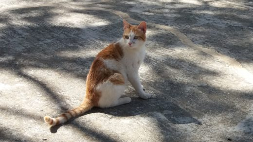 fotografia kota na Krecie, fot. Jagna Kudła - weterynarz, behawiorysta