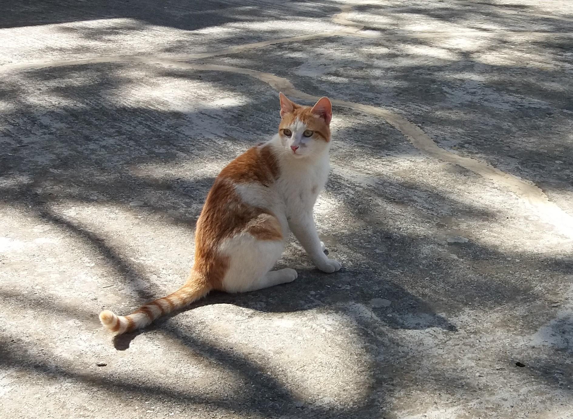 kot w podróży - fot. Jagna Kudła, weterynarz, behawiorysta