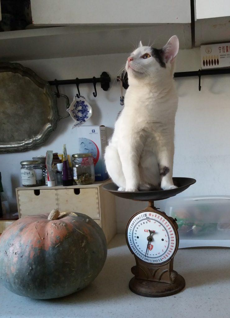 Szczęśliwy kot, to kot, który wie co go czeka