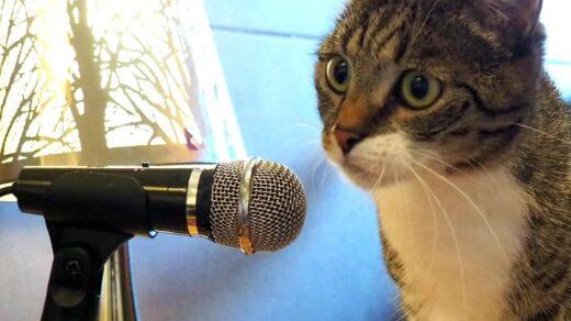kot w radio