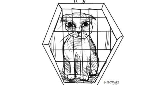 kot w transporterze
